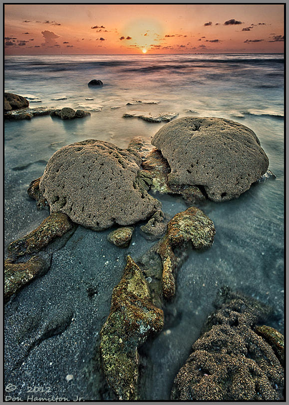 Photograph Talking Coral Heads by Don  Hamilton Jr. on 500px