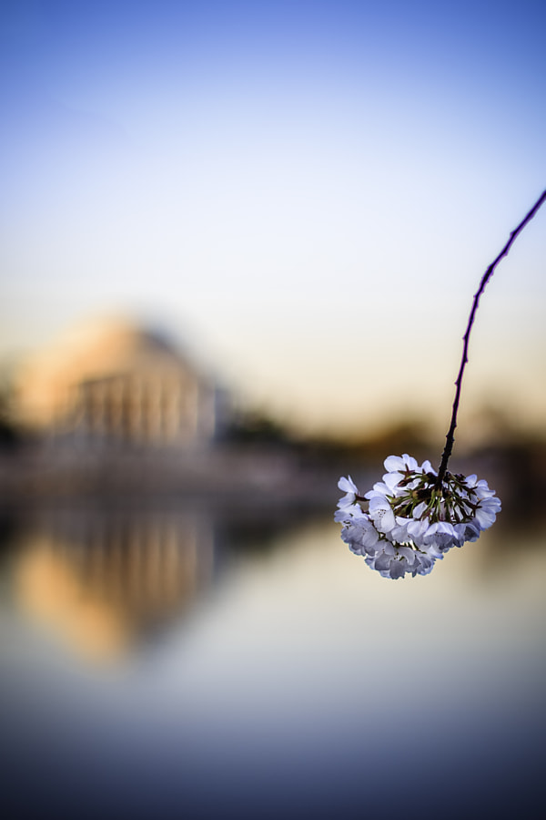 Blossom by Joe Rebello on 500px.com