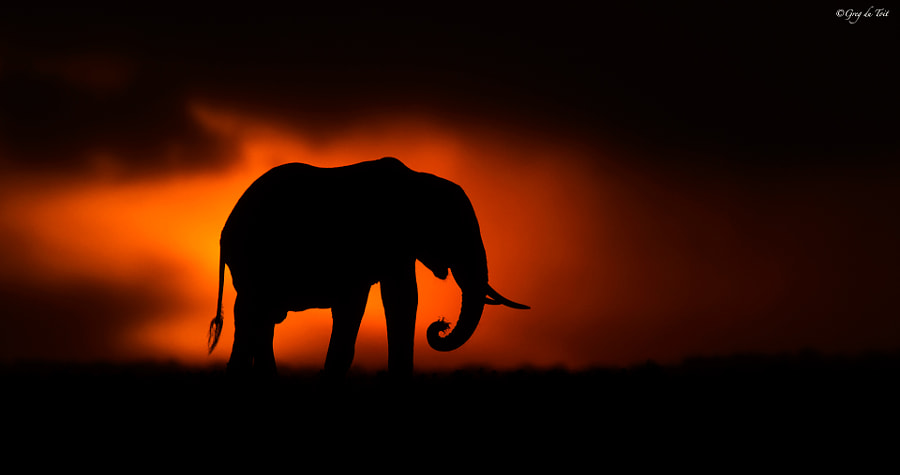 Mara Elephant by greg du toit on 500px.com