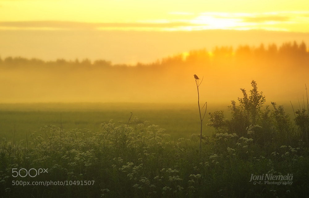 Photograph In The Evening Mist by Joni Niemelä on 500px