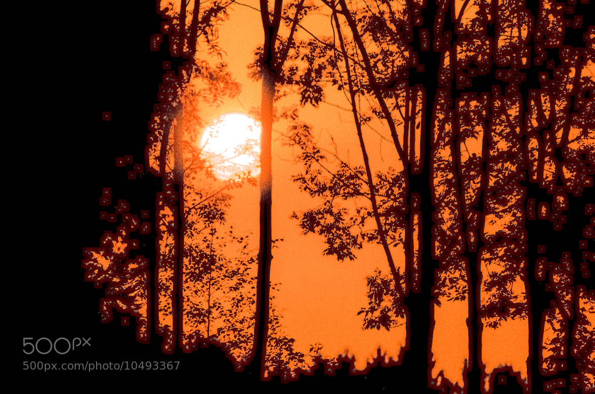 Photograph Sunrise through the Trees by julian john on 500px