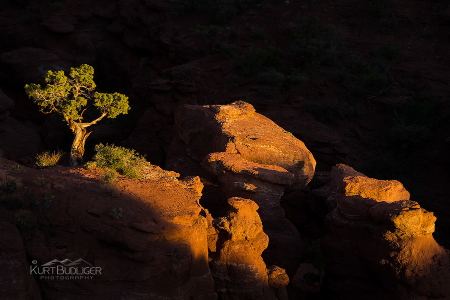 Photograph Jumpin Juniper by Kurt Budliger on 500px