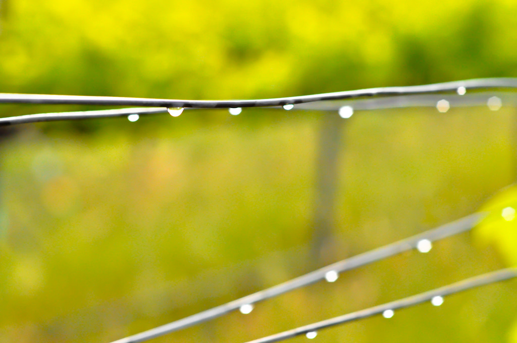 Photograph droplets by alison christiana on 500px