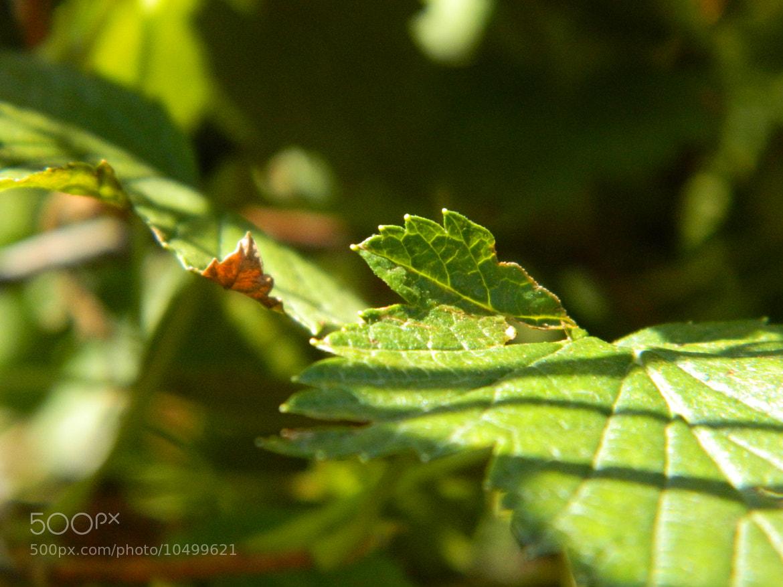 Photograph Leaf by Irina Kalashnikova on 500px