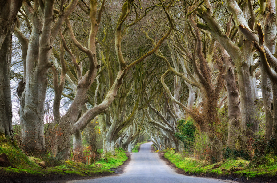 The Dark Hedges by Brian  Fullerton