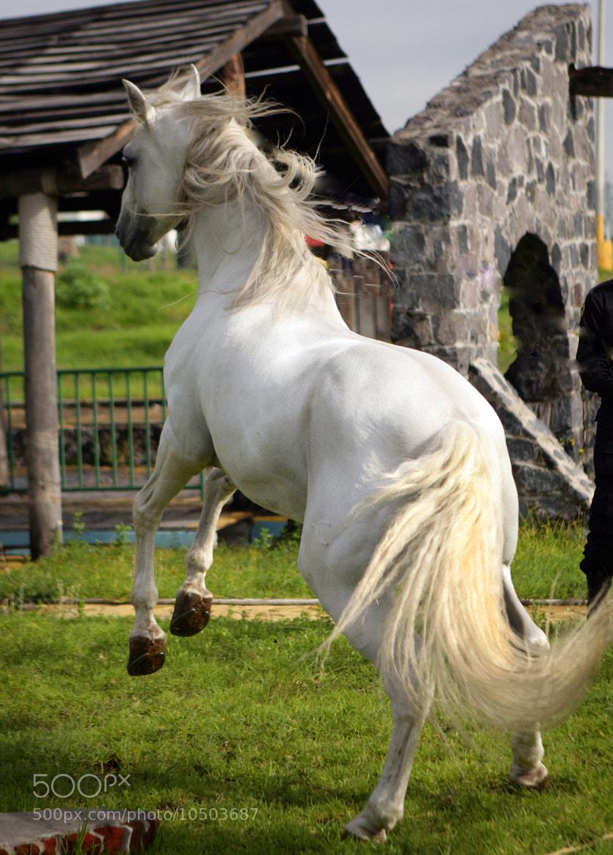 Photograph Great Stallion by Cristobal Garciaferro Rubio on 500px