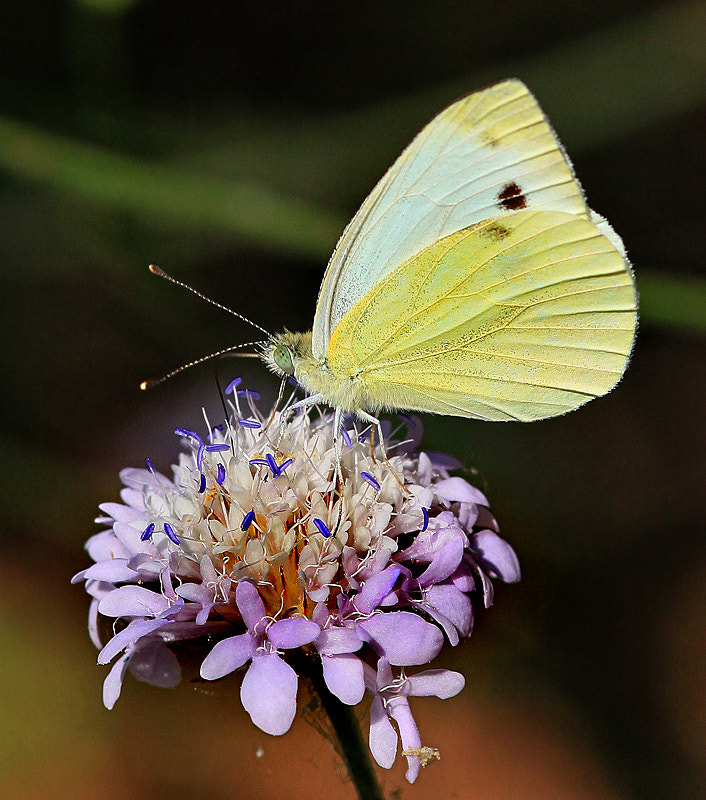 Photograph Butterfly and Flower. by Necdet Yasar on 500px