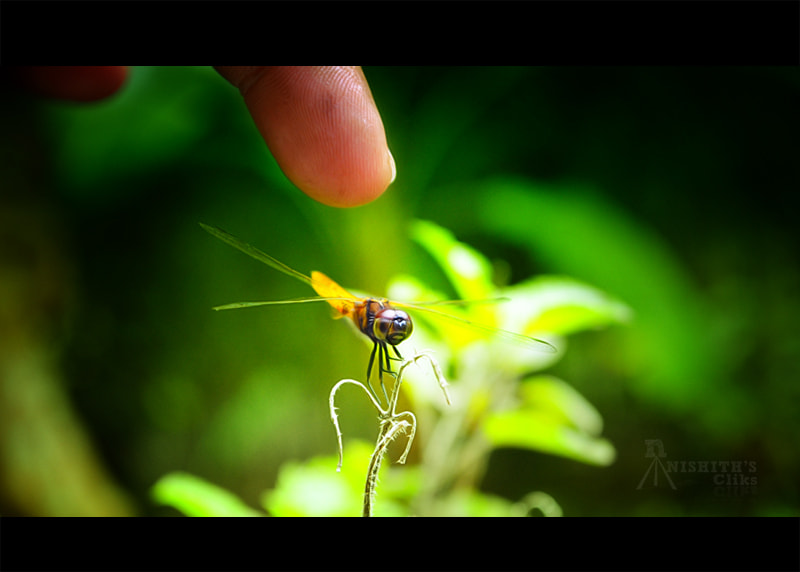 Photograph once you touch a dragon fly by Nishith Ramchandran on 500px