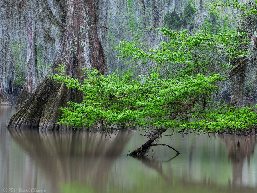 Photograph Cypress in Spring by David Chauvin on 500px