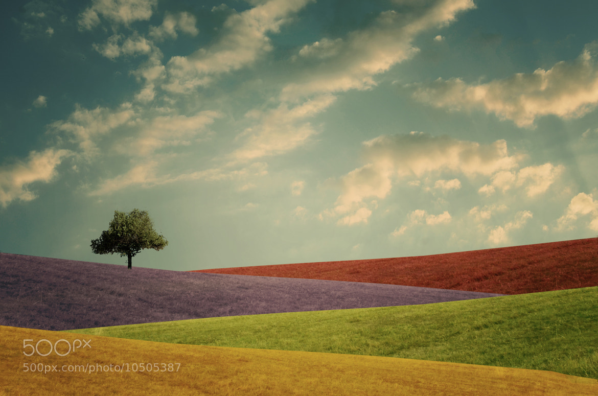 Photograph colory world by Adrian Limani on 500px