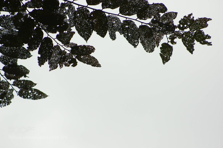 Photograph Eaten leaves by Antonio José Osuna Mascaró on 500px