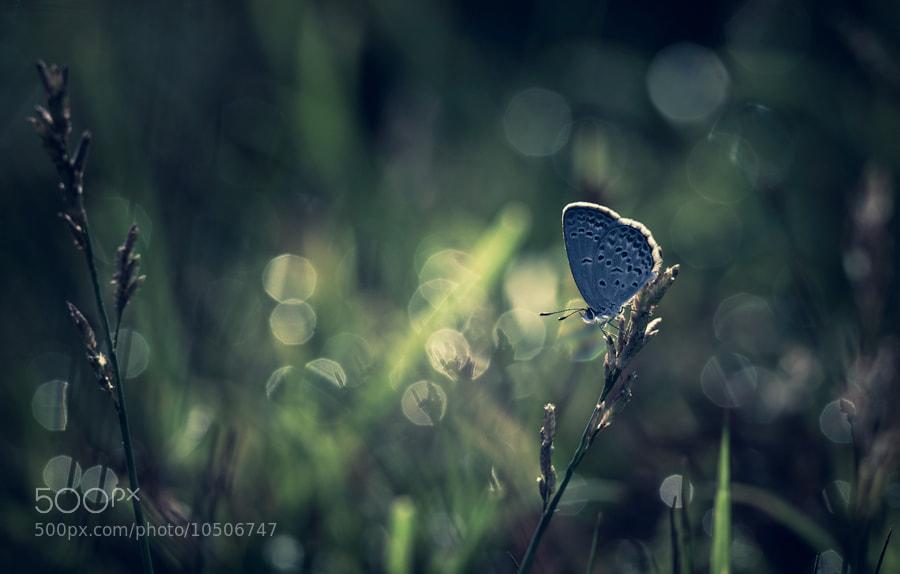 Photograph Alone by Beni Arisandi on 500px
