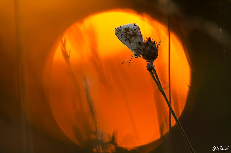 Photograph Before the night by Aline CAID WACHTEL on 500px