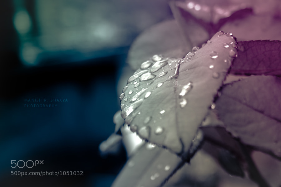 Raindrops by Manish Shakya (MrShakya)) on 500px.com