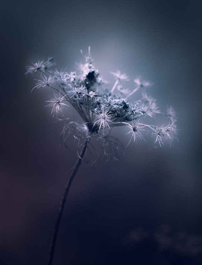 Photograph Long Live The Queen by Paul Barson on 500px