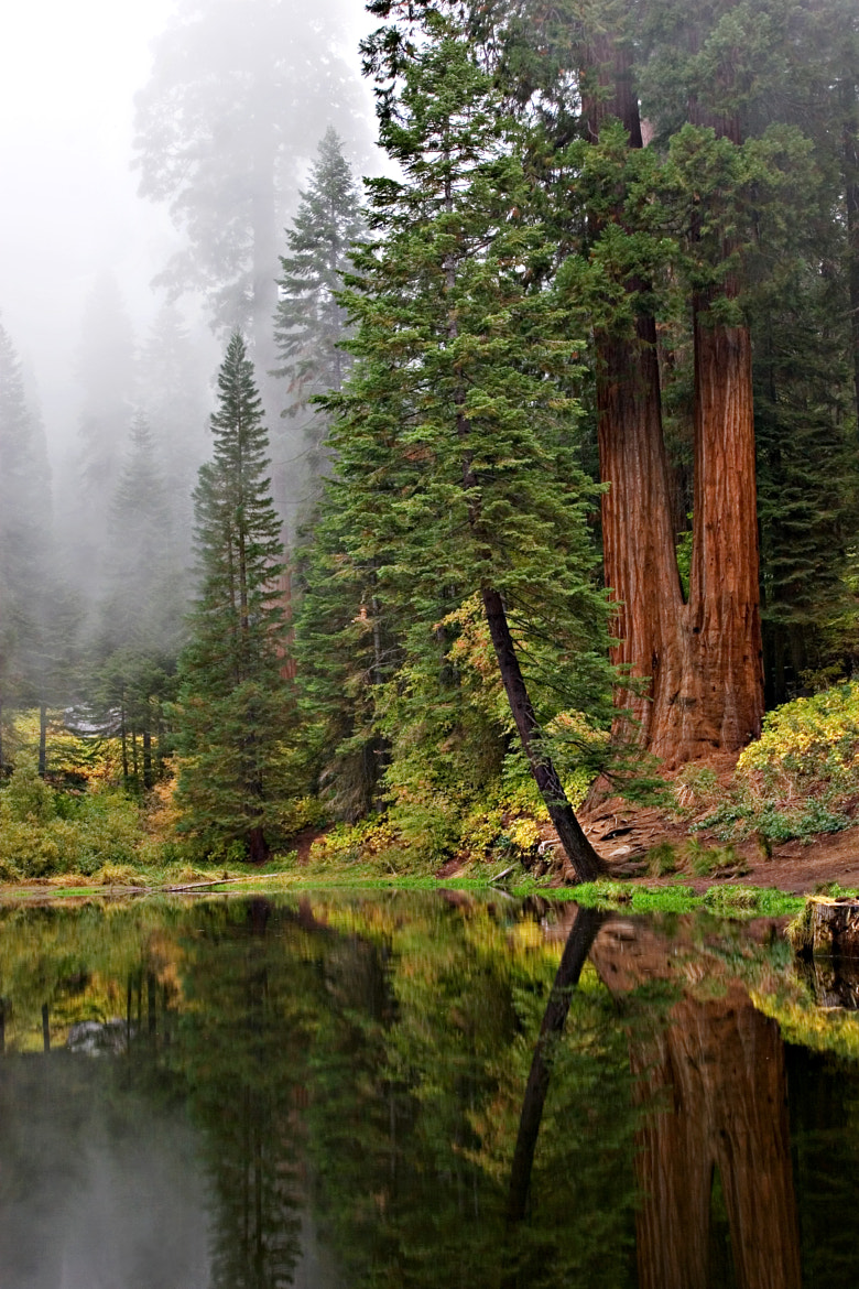 Photograph Misty Redwoods by Michael Hansen on 500px