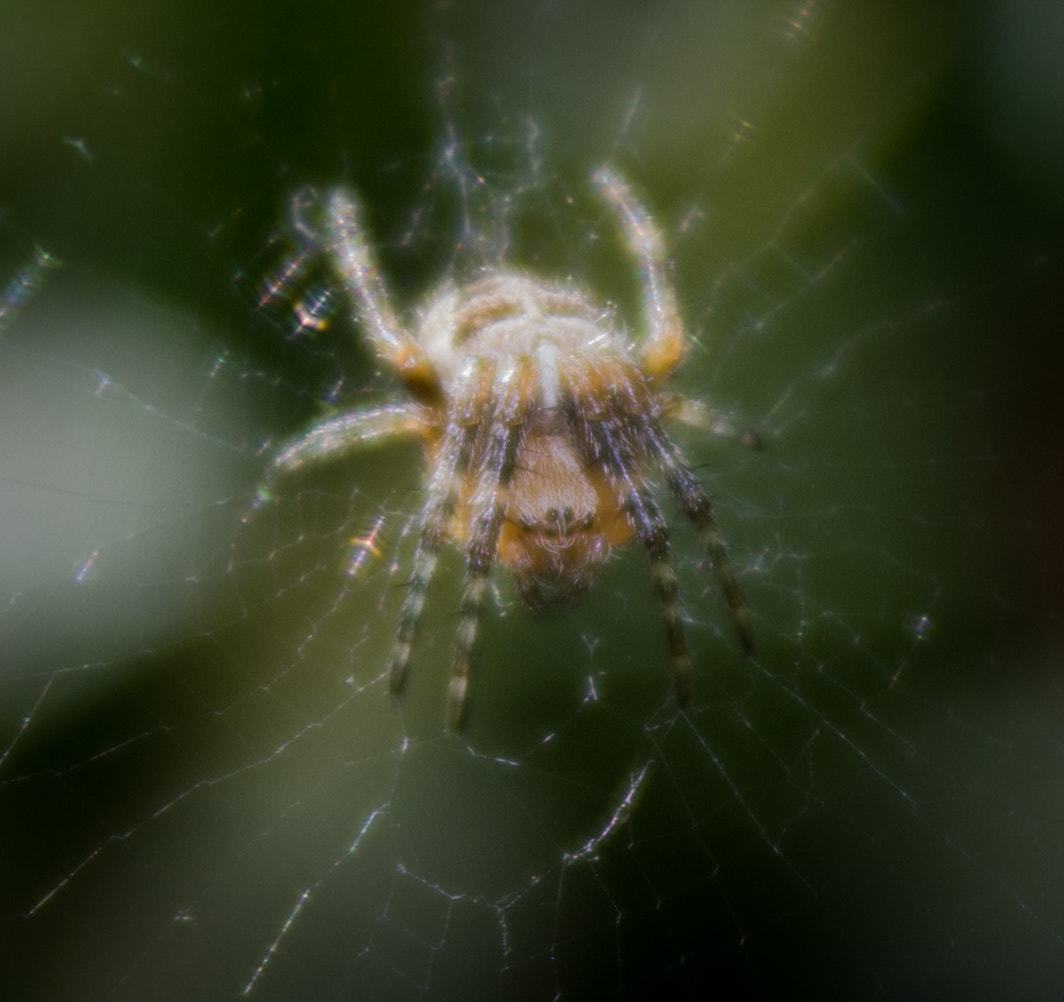 Photograph Spider by Dan Mulley on 500px