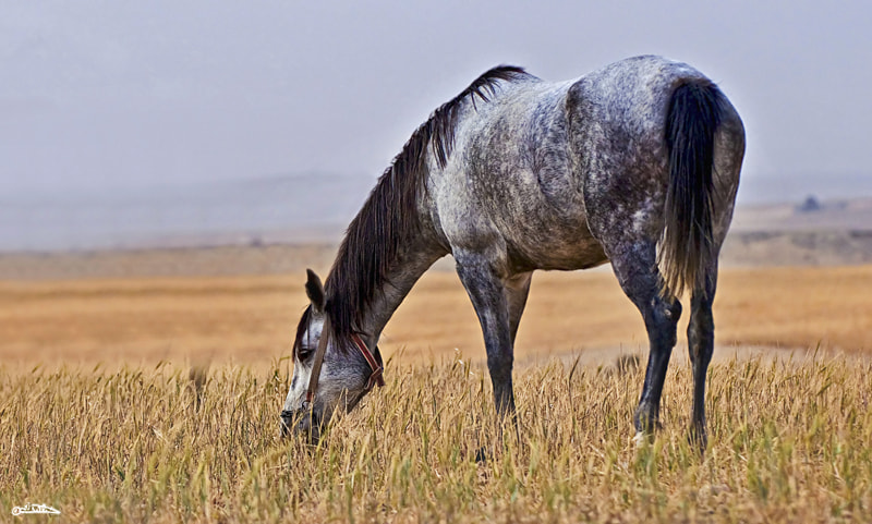Photograph Horse of a different color by Israel Weiss on 500px