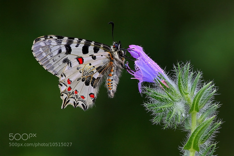 Photograph wings of nature by İlker Güneysu on 500px