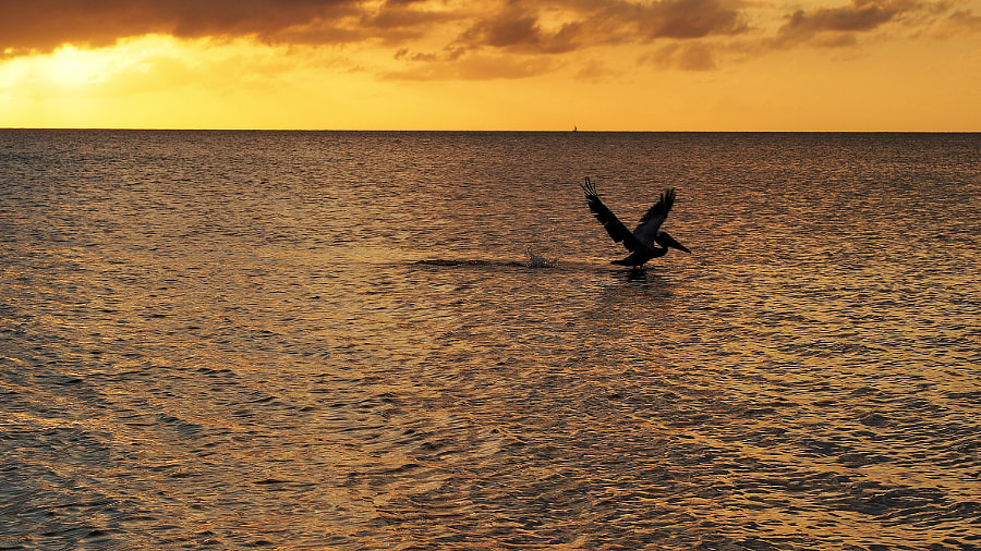 Photograph Pelican Landing by Nancy Lundebjerg on 500px