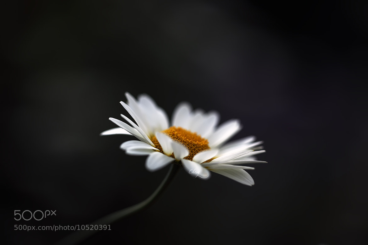 Photograph Pure by Chirag Pradhan on 500px