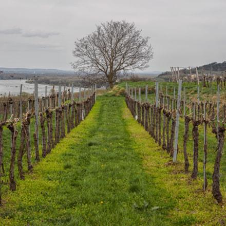 Wine & Danube