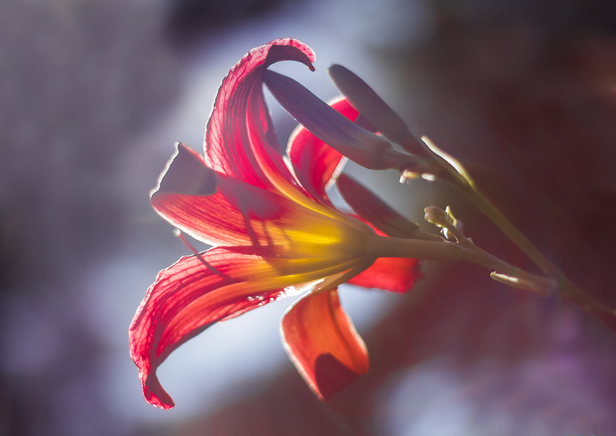 Photograph Flower's dream. by Mario Brouard on 500px