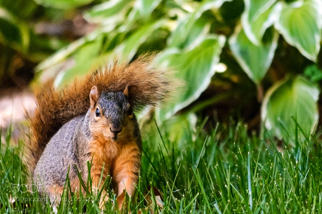 Photograph I saw a squirrel! by Kathryn Ellis on 500px