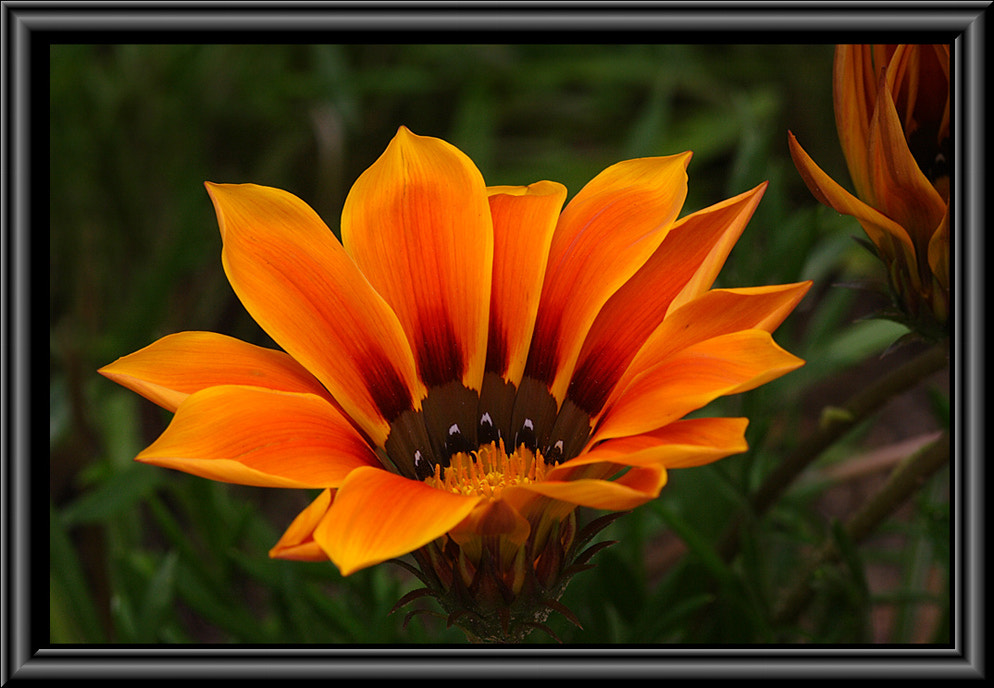 Photograph When a Daisey Smiles by Greg McLemore on 500px