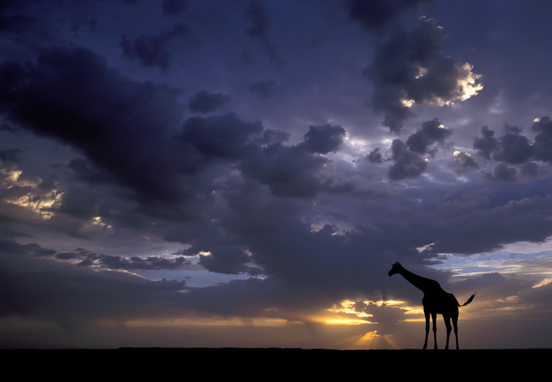 Photograph African Sunset by Marsel van Oosten on 500px
