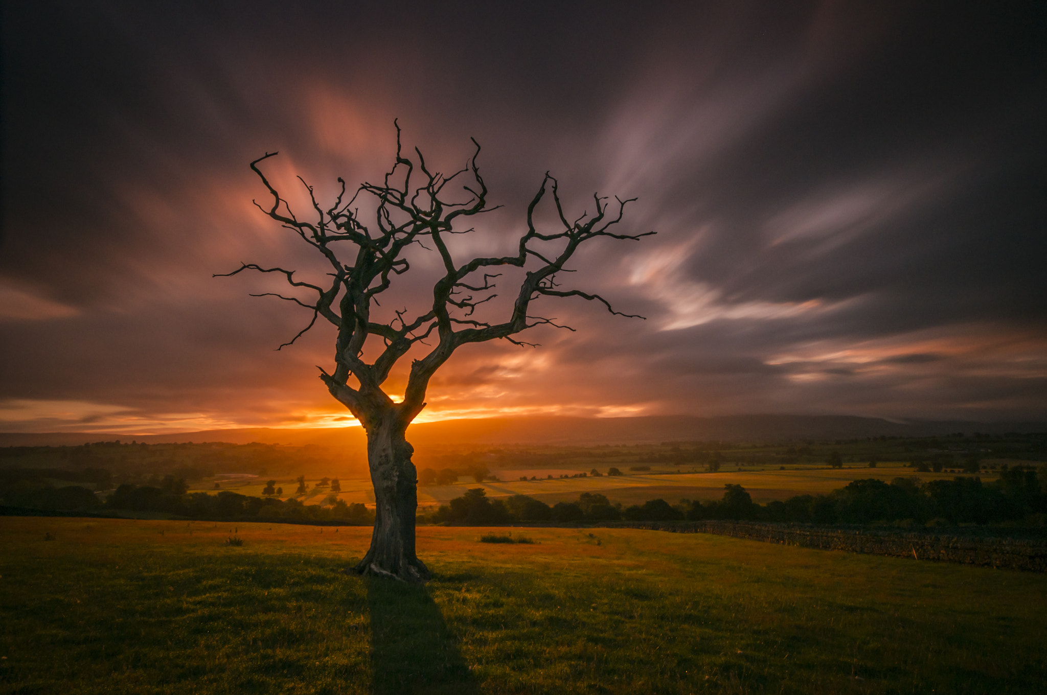 Photograph Dawn Tree by Mark Littlejohn on 500px