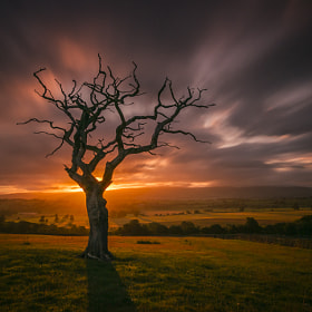 Dawn Tree by Mark Littlejohn (MarkLJ)) on 500px.com