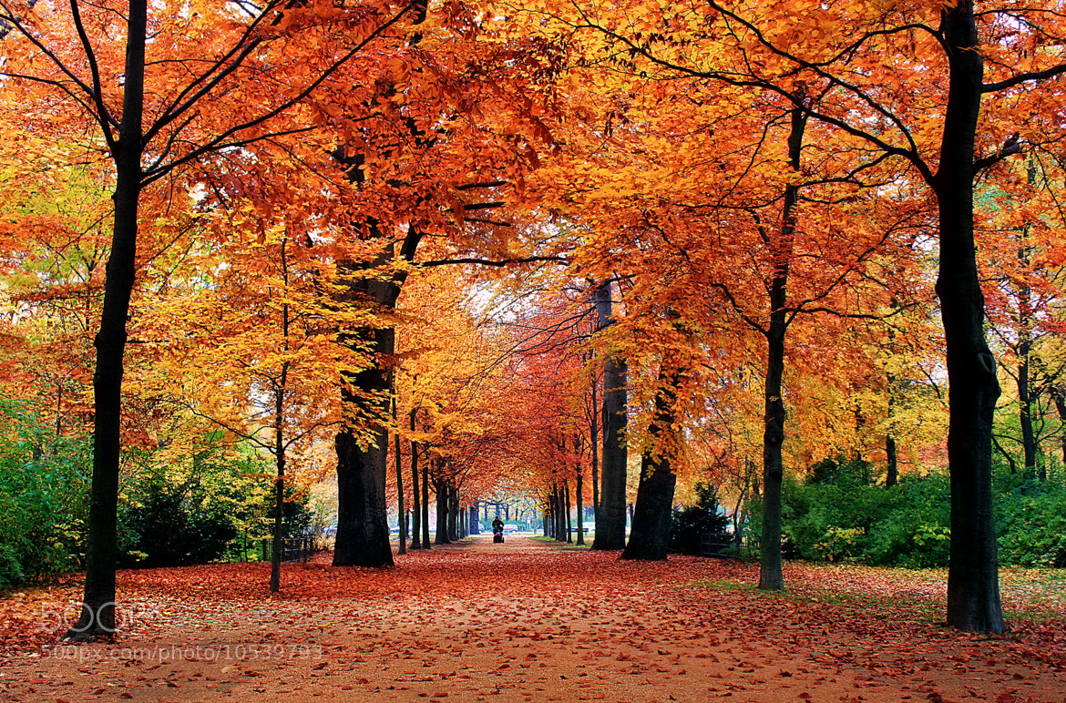 Photograph Fall in Berlin by Musa KAYRAK on 500px