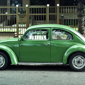 The green beetle... by MAMEDE HARFOUCHE (HARFOUCHE)) on 500px.com