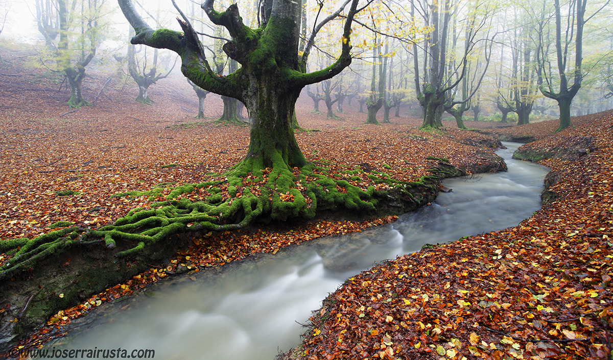 Photograph The forest by joserra irusta on 500px