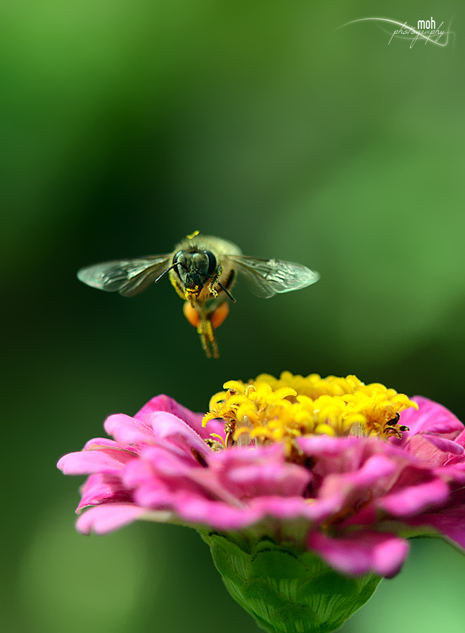 Photograph Still Flying :) by Mohan Duwal on 500px