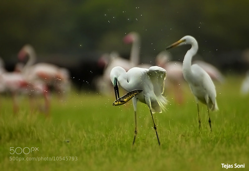 "Photograph ""Feast today"" by Tejas Soni on 500px"