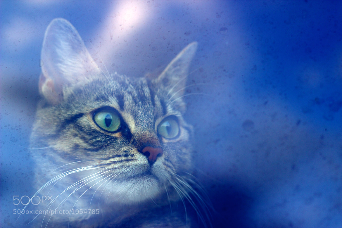Photograph Dreaming of outside by iFloris on 500px