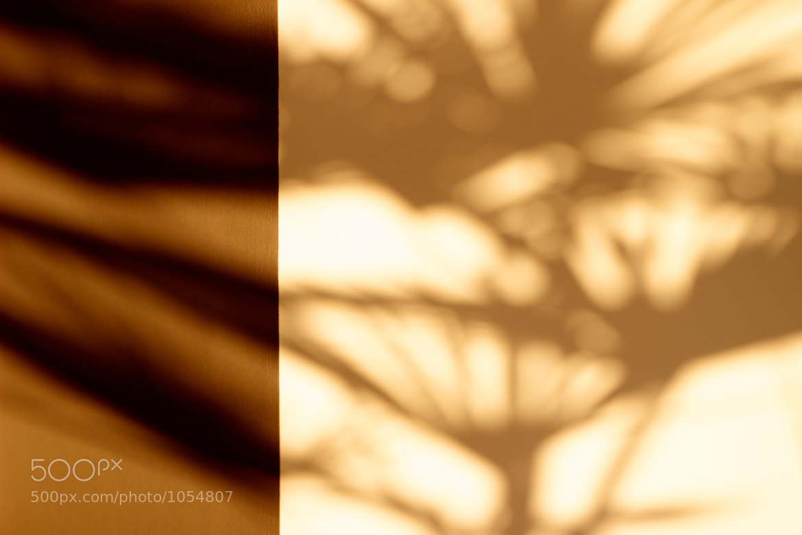 Photograph Split shadow by iFloris on 500px