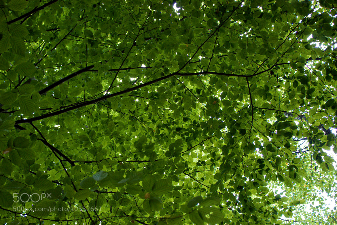 Photograph Cielo verde by Carlos Rebato on 500px