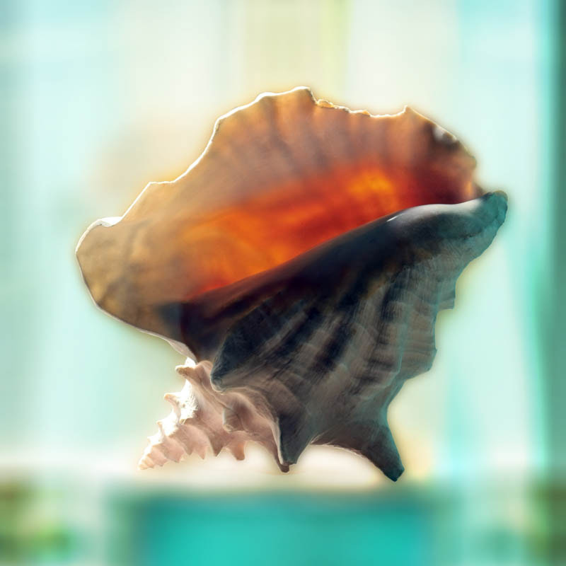 Photograph Sunlight Conch by Rebecca Michael on 500px