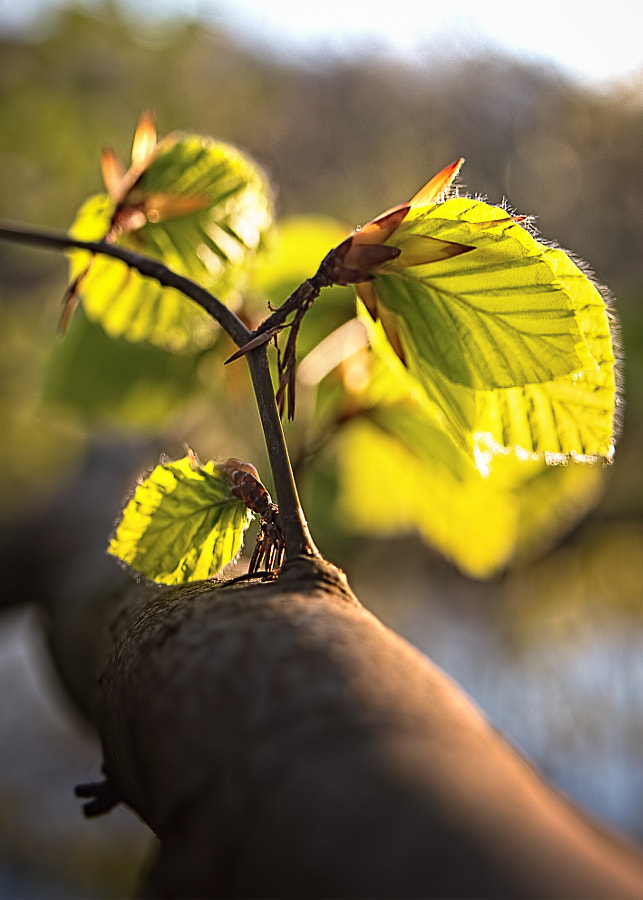 Blätte im Frühling
