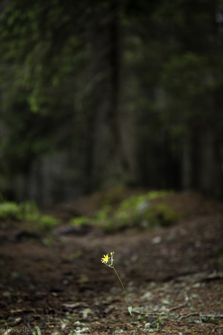 Photograph Only the lonely by Daniel Furdea on 500px