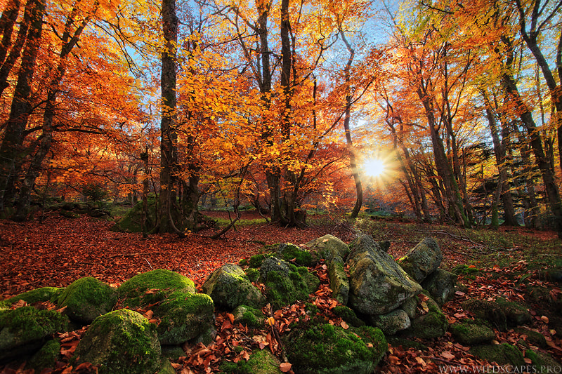 Photograph Ode to Autumn by Maxime Courty on 500px