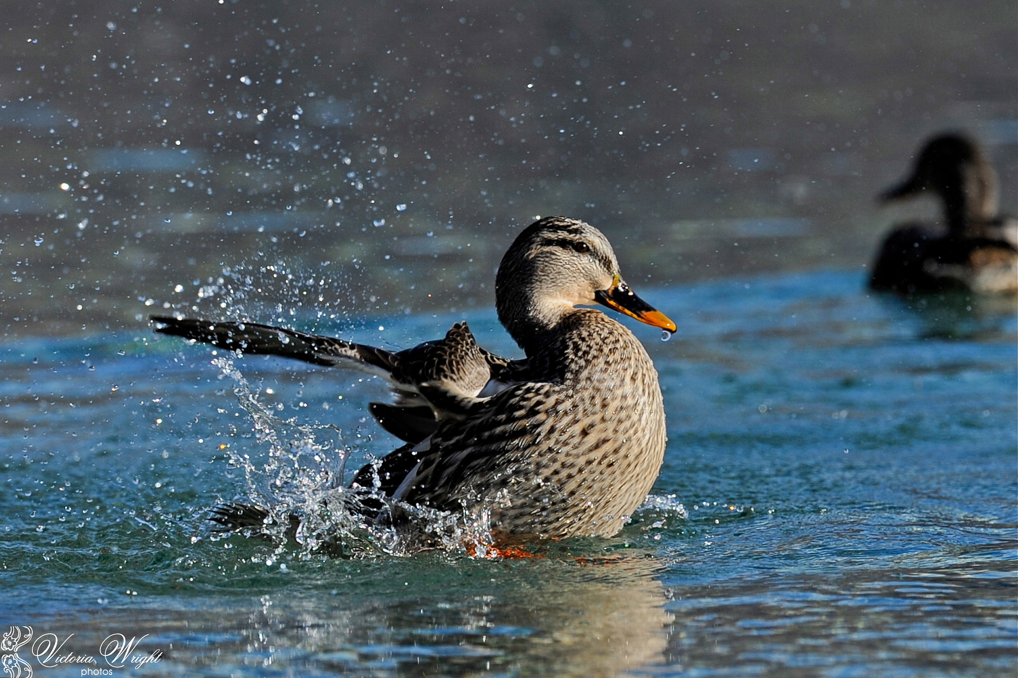 """Photograph """"Splash"""" by Victoria Wright on 500px"""