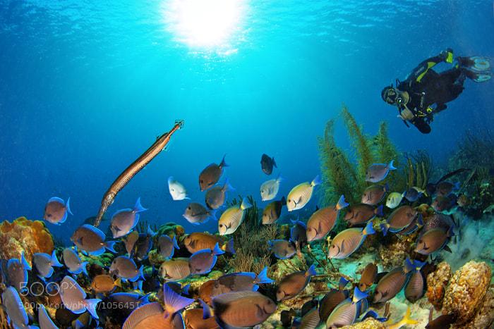 Photograph aquarius by Marcio  Cabral on 500px