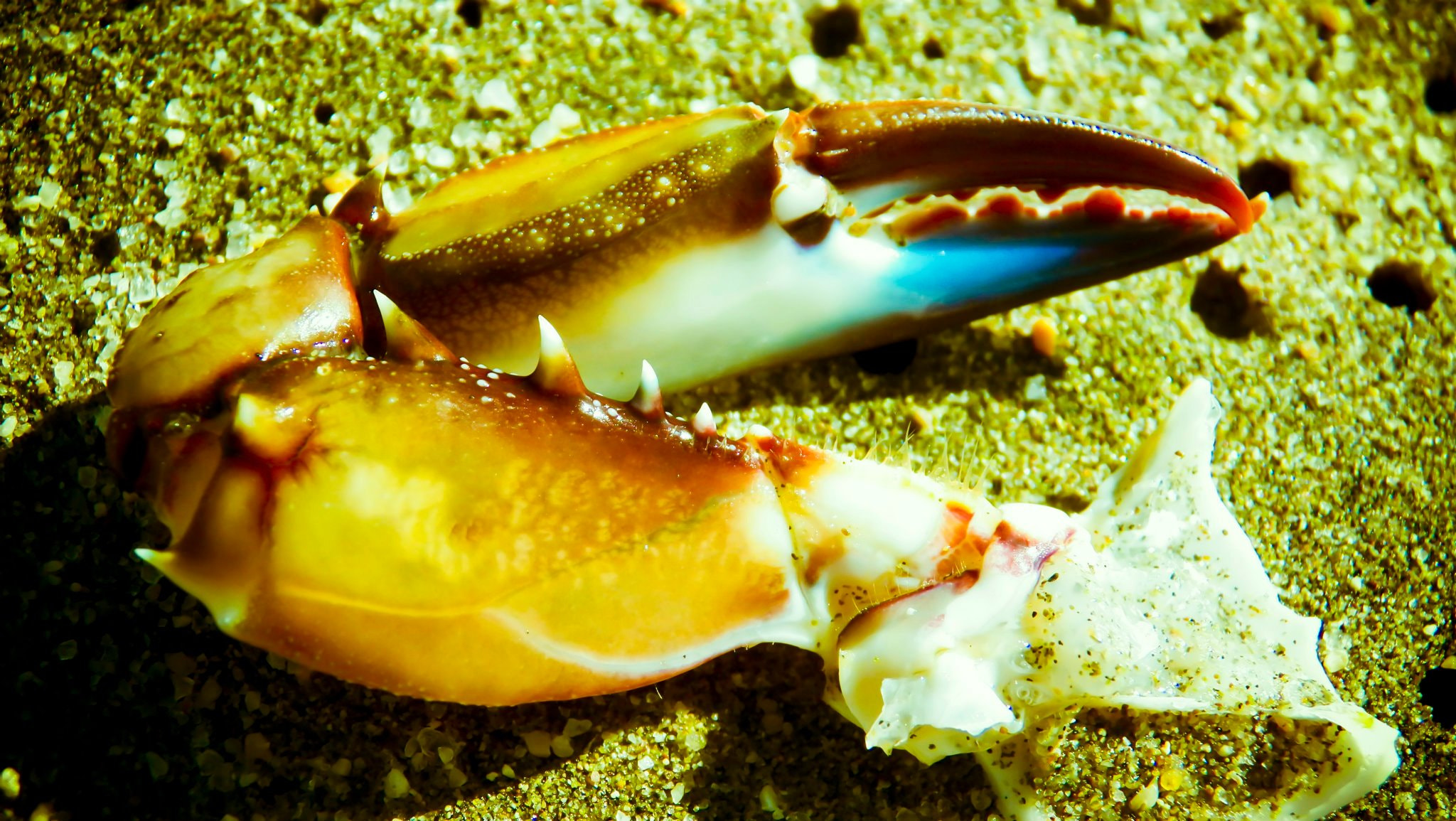 Photograph Claw by Horacio Macalpin on 500px