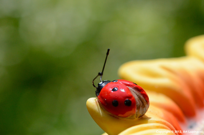 Photograph Porcelain Lady Bug by Art Lupinacci on 500px