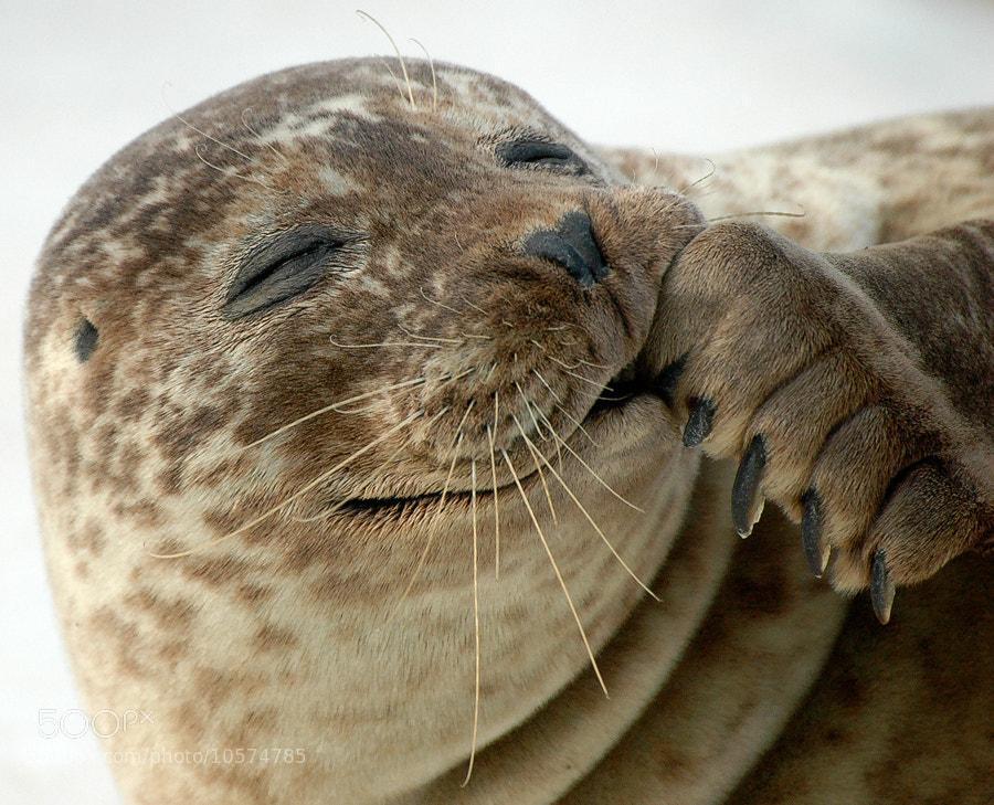 Photograph Happy seal by Christina Skov on 500px