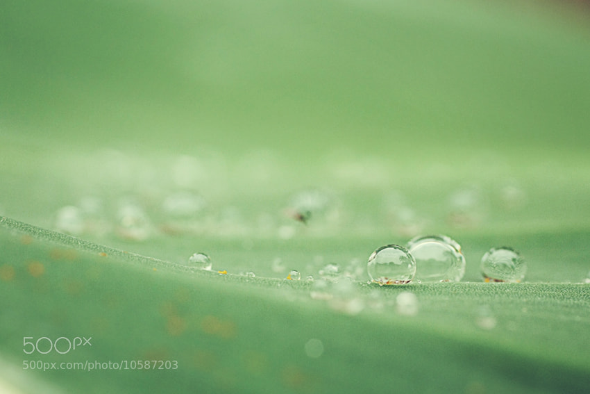 Photograph After Rain by Julia S on 500px